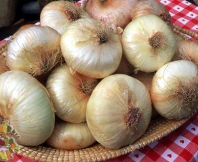 cipolla giarratana presidio slow food